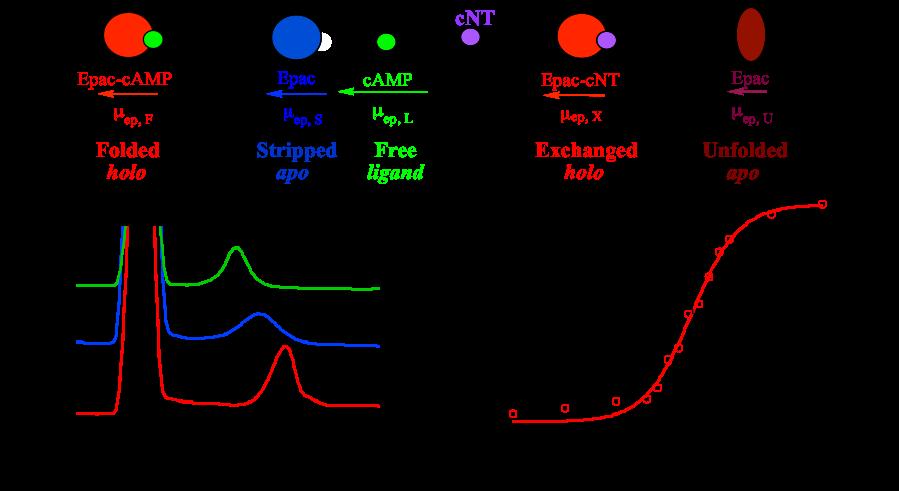 Figure 1-Biomolecular Interactions